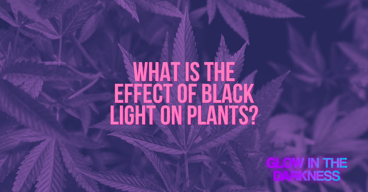 black light on plants