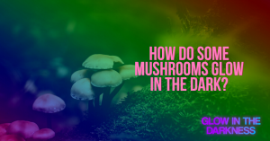 mushrooms glow in the dark