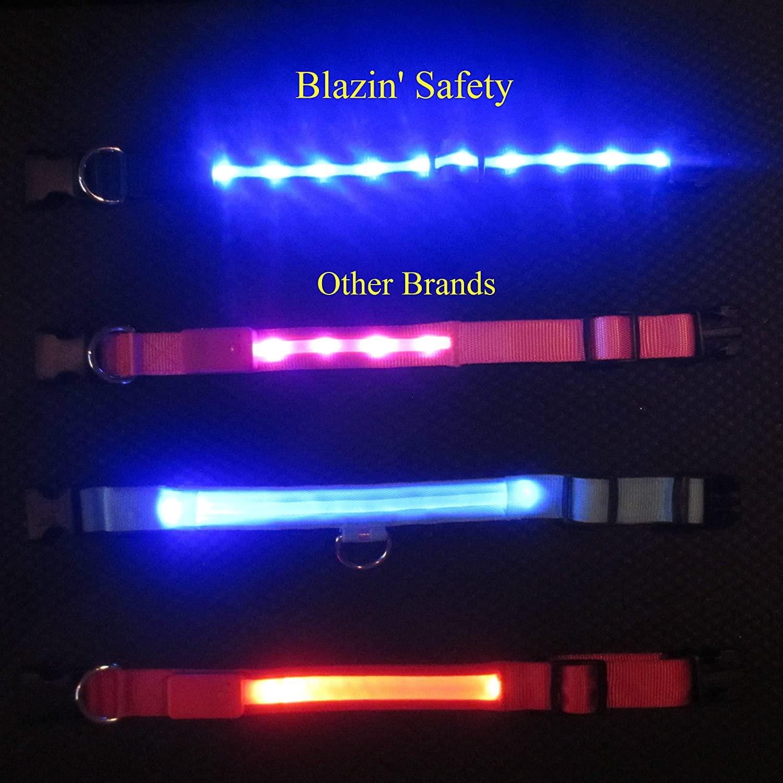 Blazin Safety LED dog collar 2