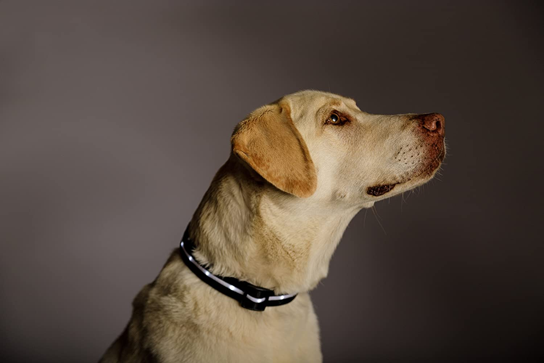 Blazin Safety LED dog collar 3