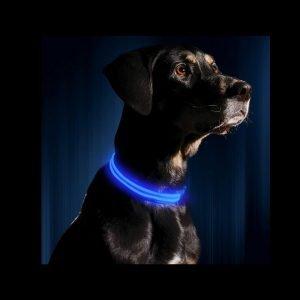Illumiseen LED dog collar review