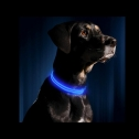 Illumiseen Light Up LED Glow in the Dark dog collar, detailed review